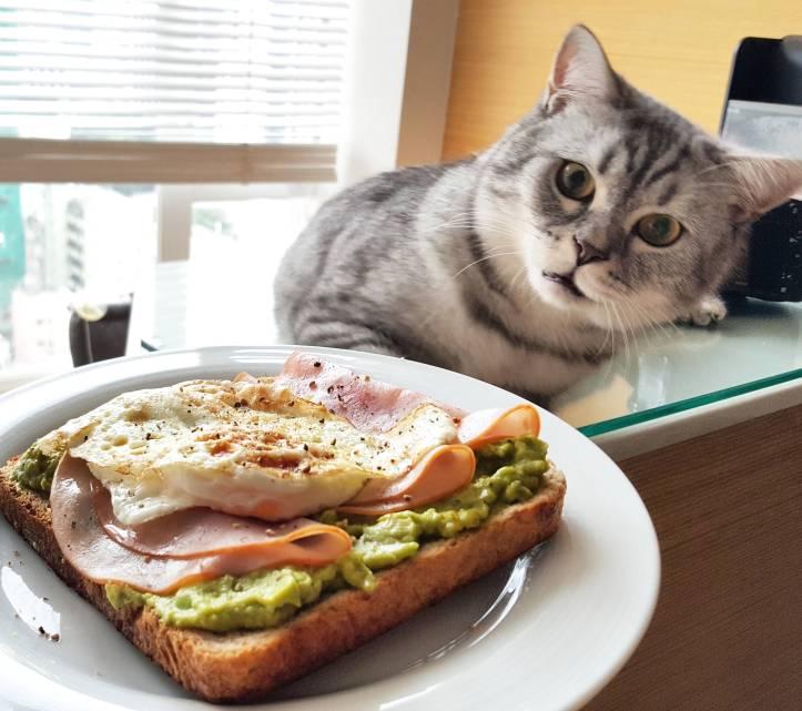 alimentazione dei gatti